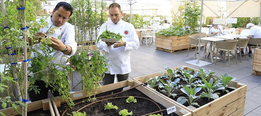 Huerto en un restaurante ecológico
